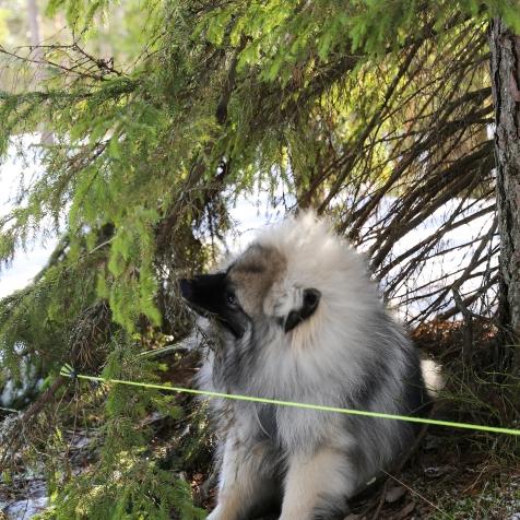 neulehame 3_jänis ja ilves_samoilevat sukkaset_metsässä-31