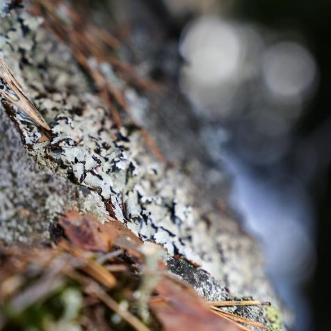neulehame 3_jänis ja ilves_samoilevat sukkaset_metsässä-40
