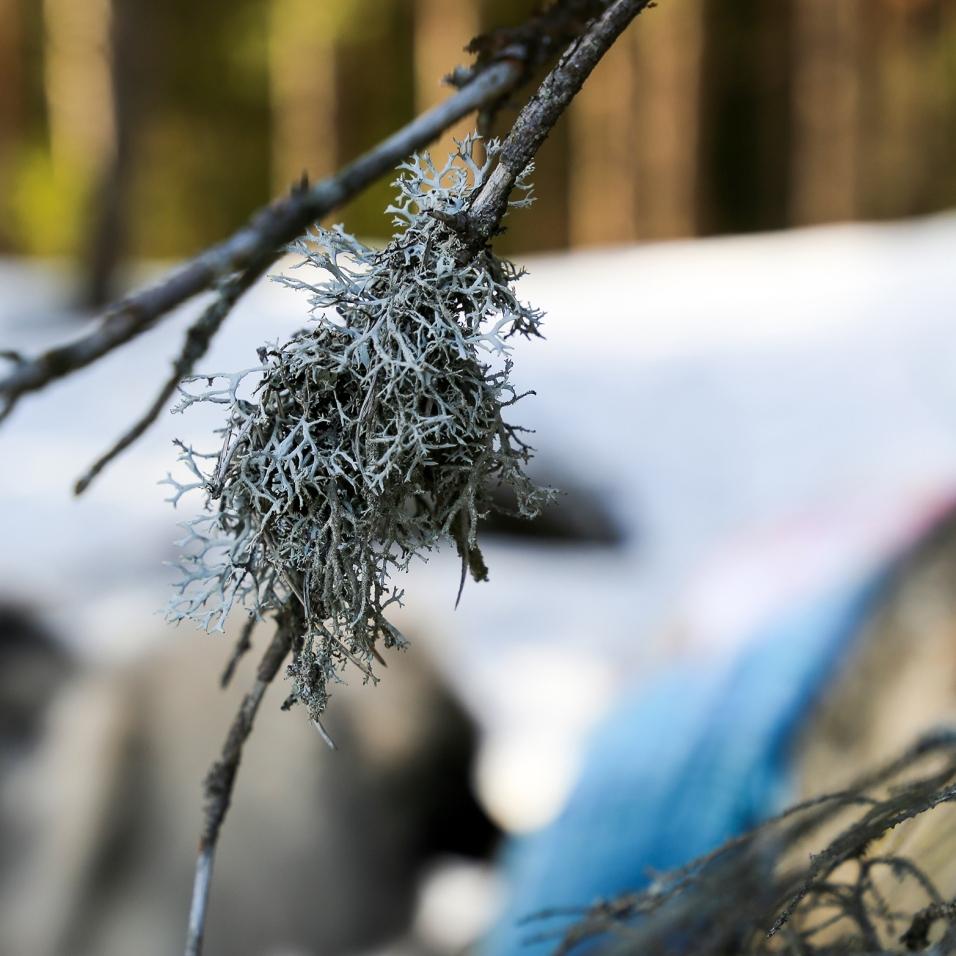 neulehame 3_jänis ja ilves_samoilevat sukkaset_metsässä-44