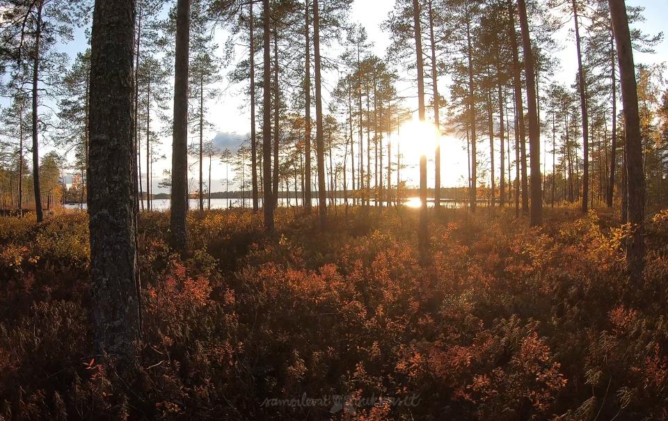 Armoton erämaa_salamajärvi_samoilevatsukkaset_iristanttu