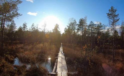 Salamajärvi_samoilevatsukkaset_iristanttu_neuleretkeily1