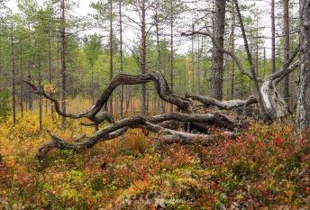 Salamajärvi_samoilevatsukkaset_iristanttu_neuleretkeily4